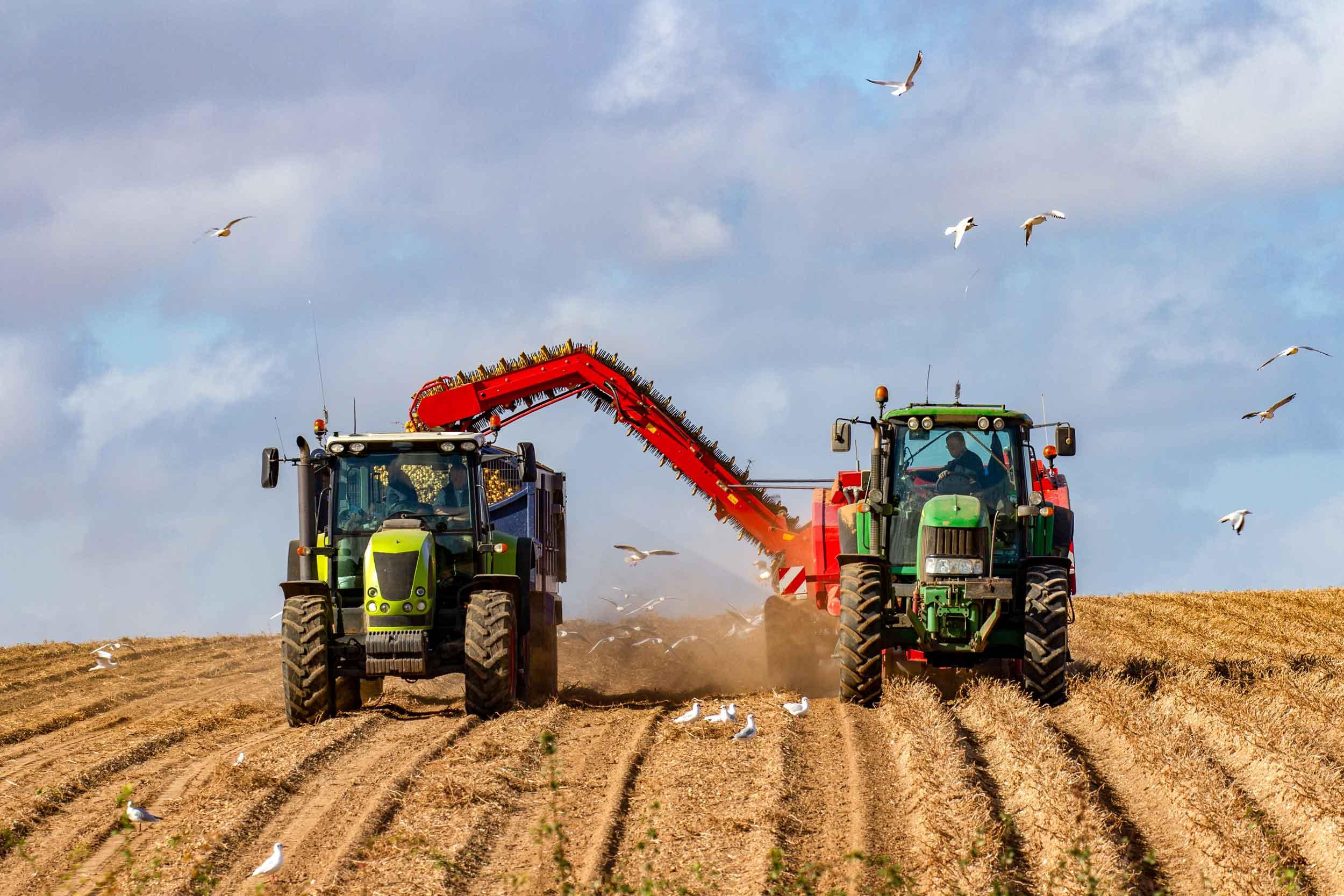 Potato Farming Solution
